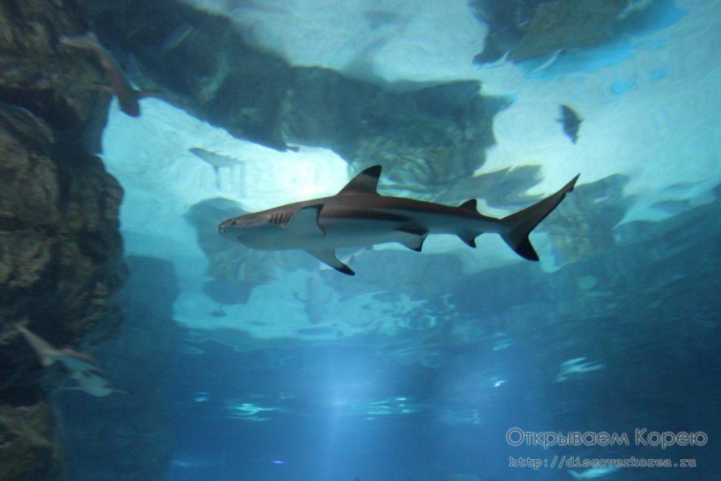 аквариум COEX г.Сеул