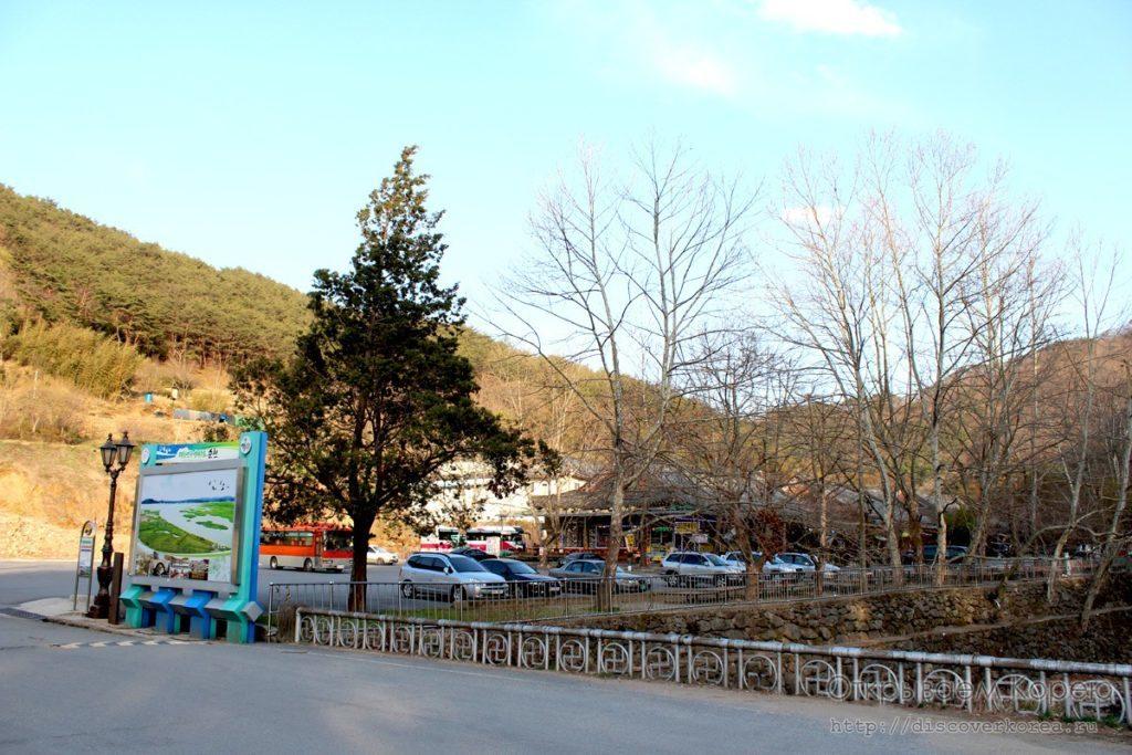 сакура в корее - стоянка