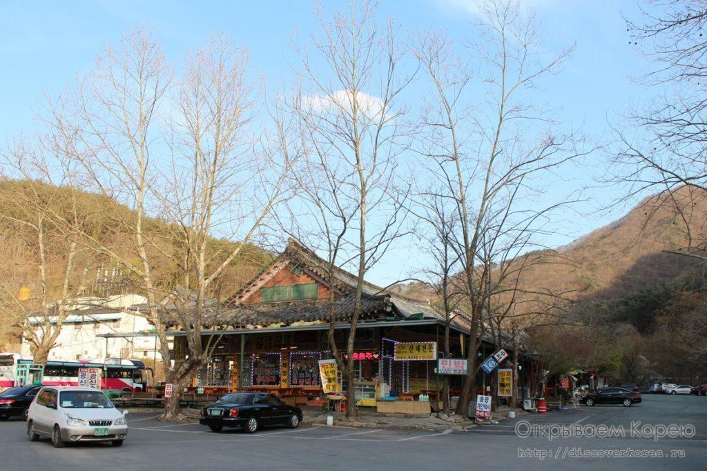 Цветение вишни в Корее9