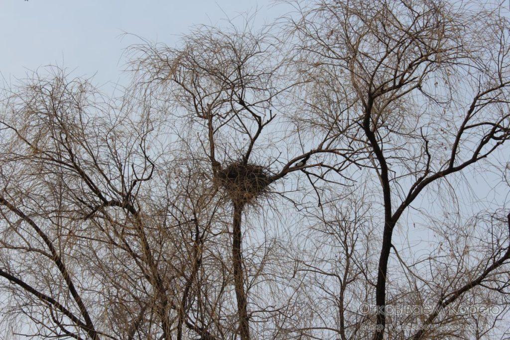 Кёнбоккун-гнездо