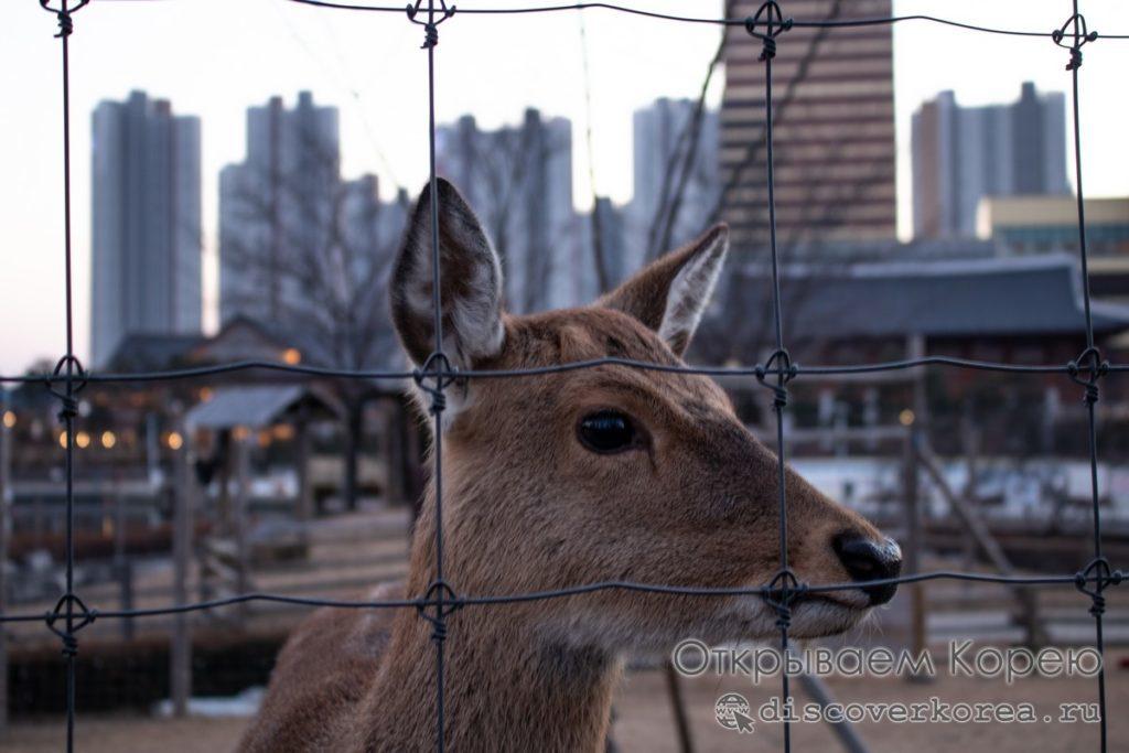 Central Park Songdo -центральный парк Сонгдо