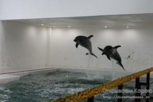 Остров Чеджудо — Дельфинарий Marine Park
