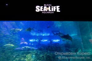 Sea Life океанариум в Пусане