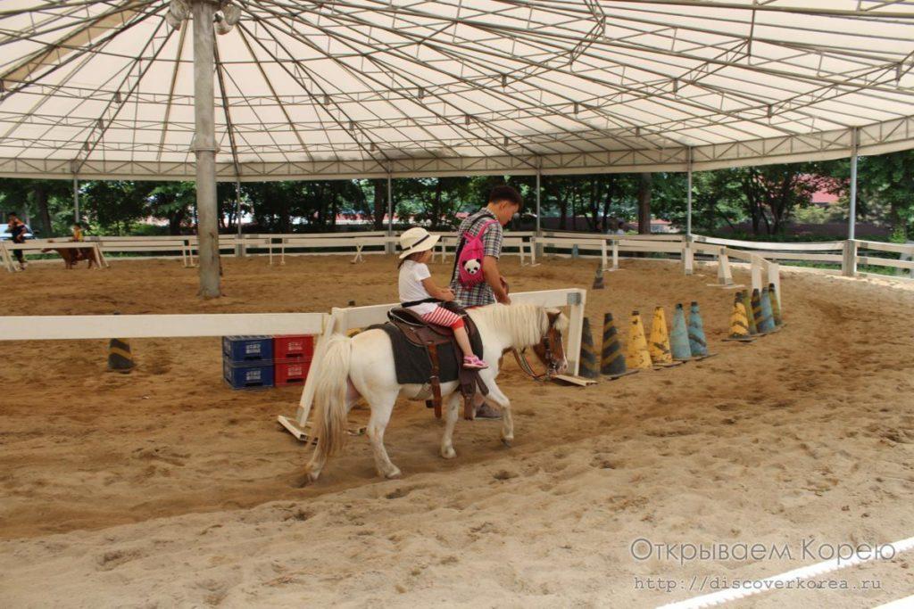 катаемся на пони-арена