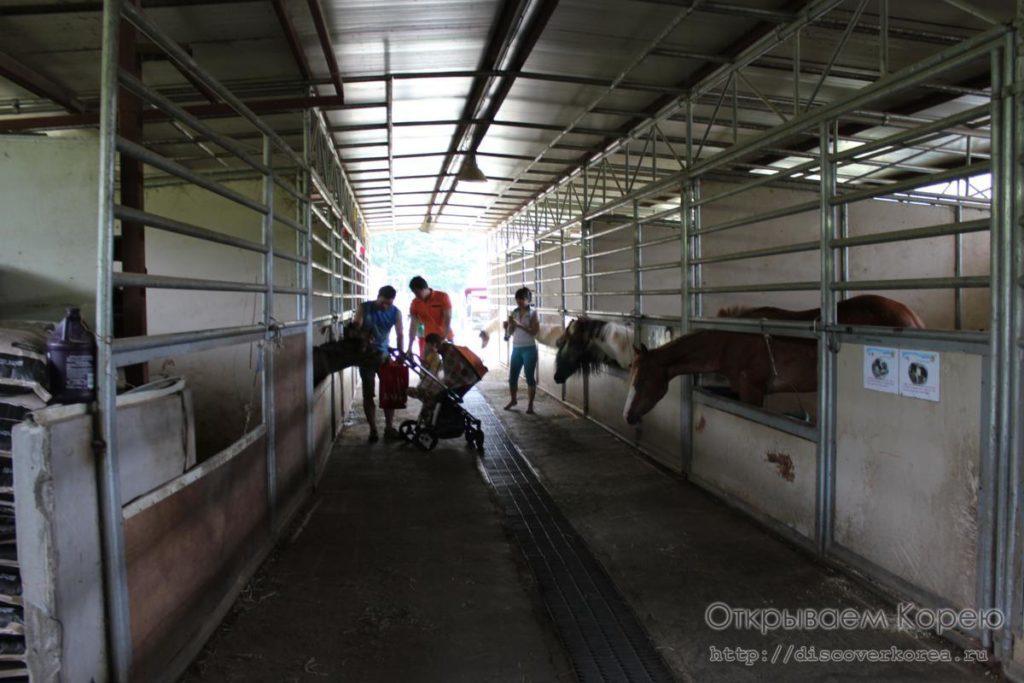 стойло лошадей в парке