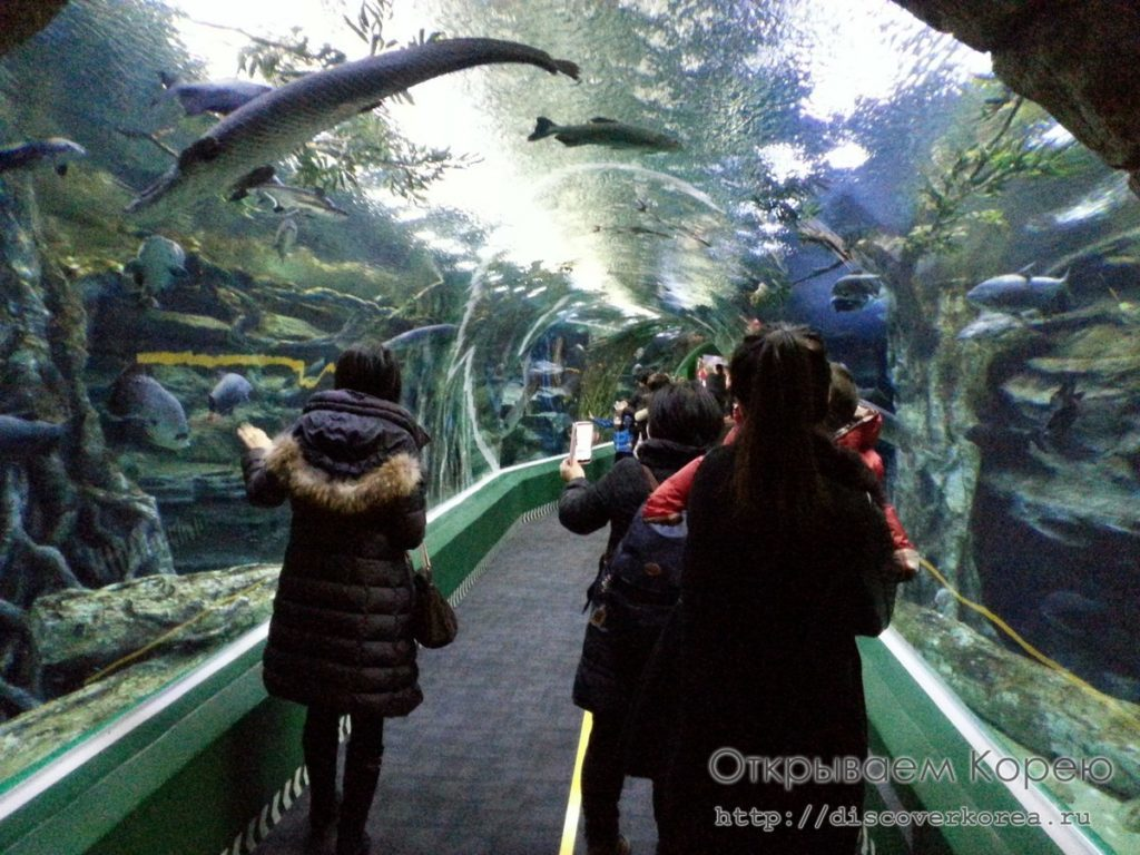 Lotte Tower Aquarium4