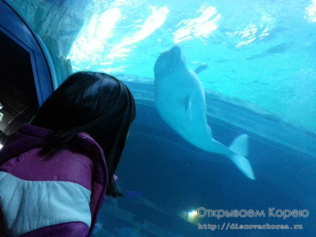 Lotte Tower Aquarium5