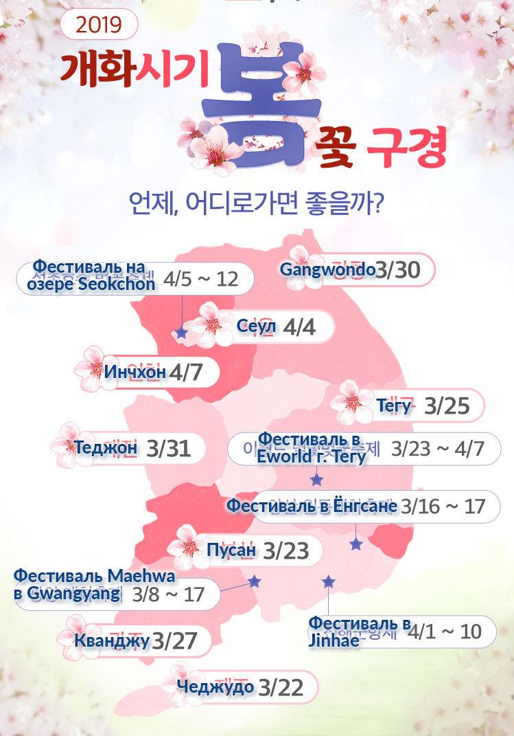 Сакура в Корее прогноз на 2019 год