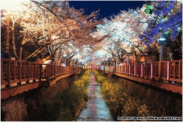 Цветение вишни в Сеуле