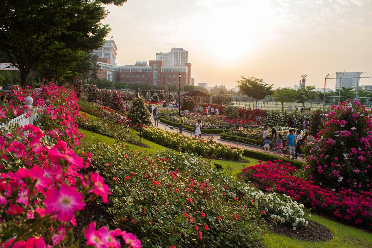 Фестиваль роз в Кванджу